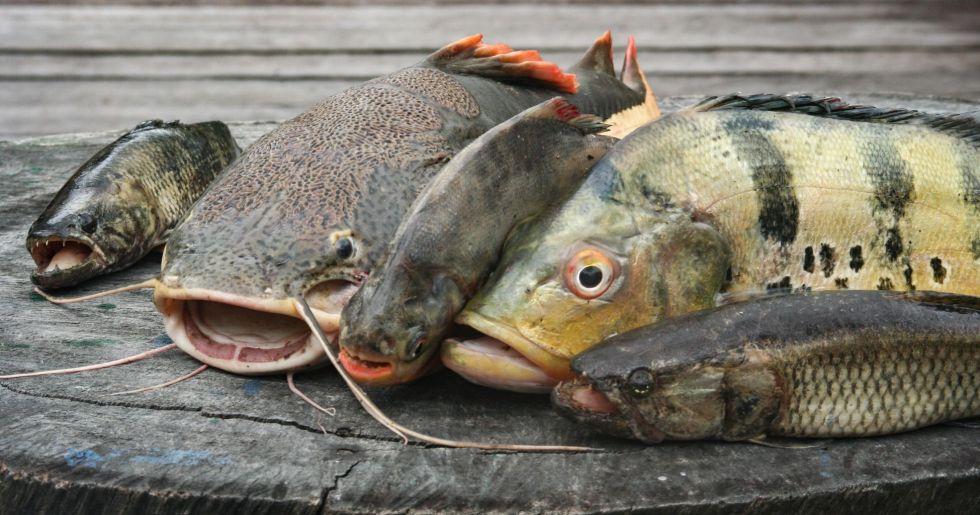 lowienie ryb w dzungli