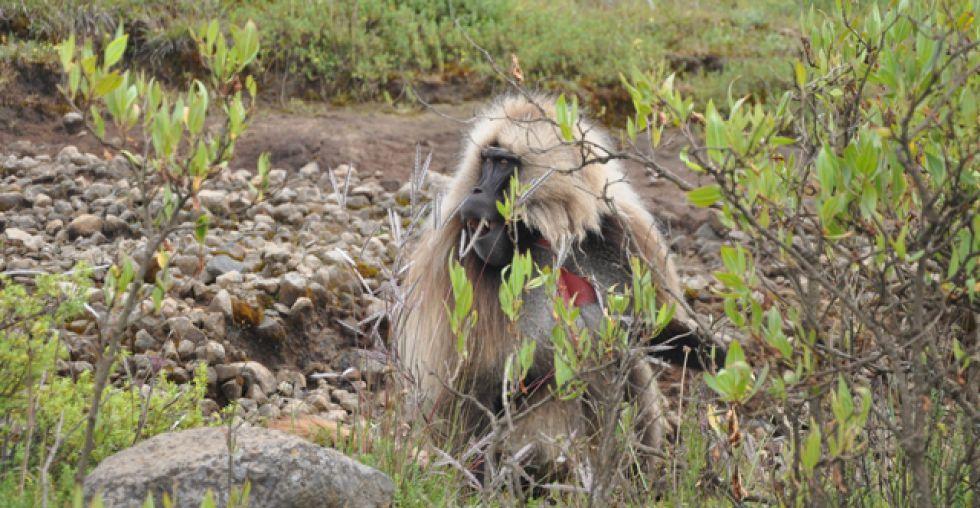 Niesamowity Park Simen w Etiopii.