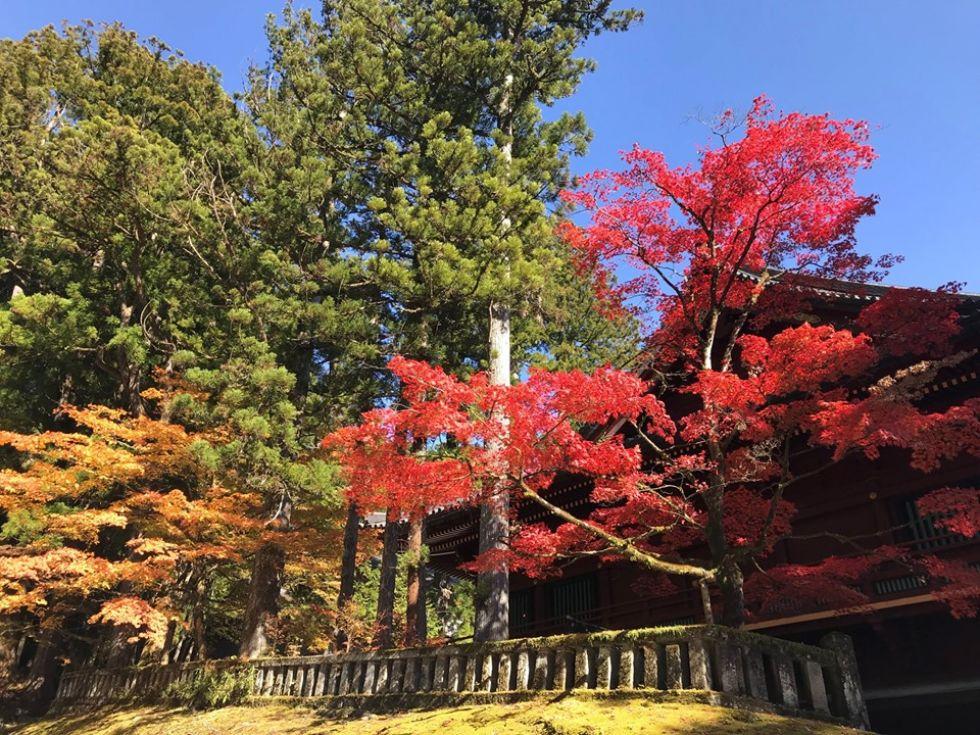 szczyt-sezonu-w-japonii-kwitnienie-klonow