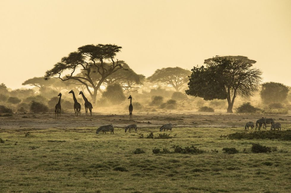 widok na step w keni i afrykanskie zwierzeta