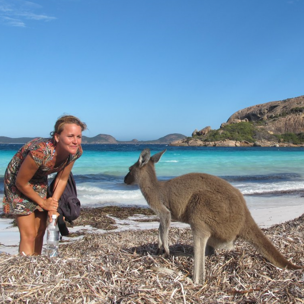 kangur w nowej zelandii