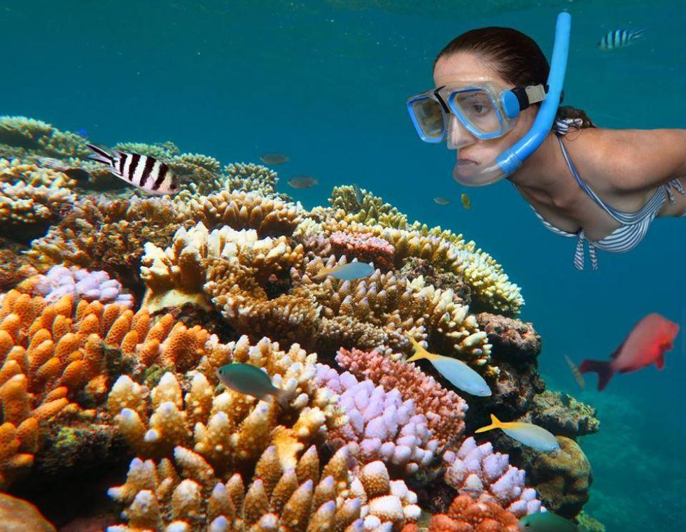 nurkowanie miedzy rafami koralowymi w australii