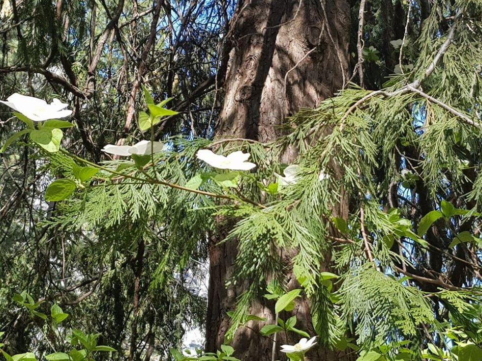 kwiaty w parku yosemite