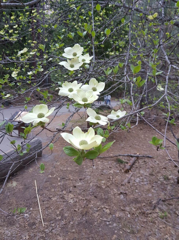 wiosna w parku yosemite