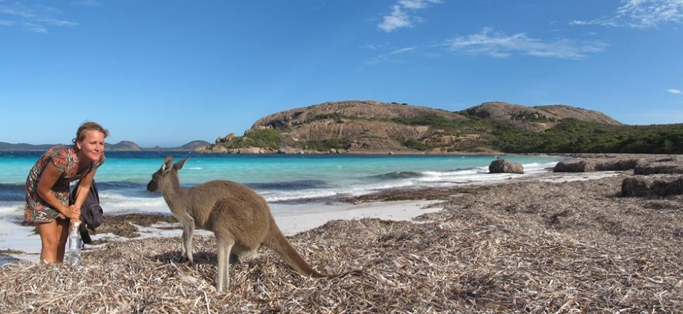 kangur na tle australijskich widokow