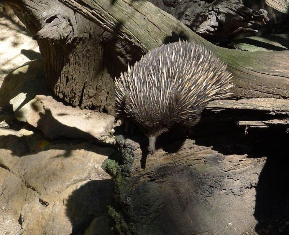 zwierzeta w australii