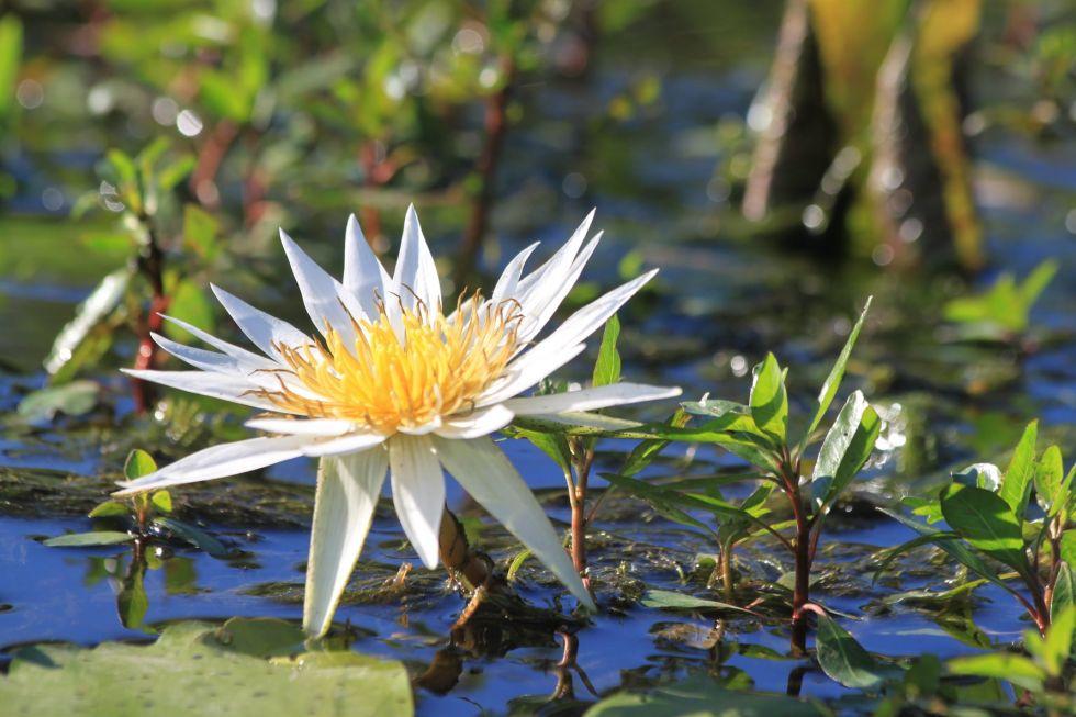 flora afryki