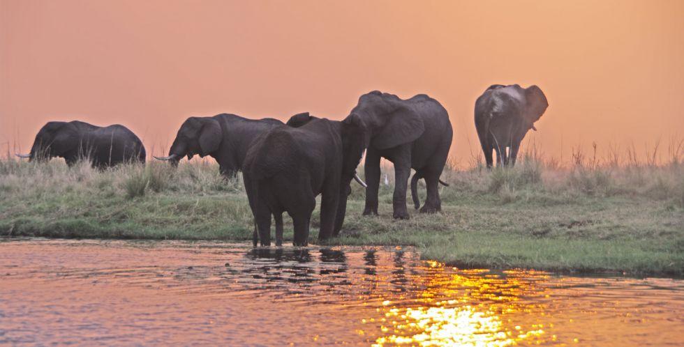 slonie przy wodopoju w afryce