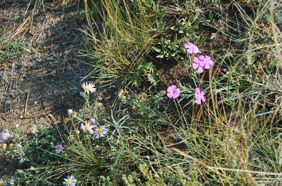 rosyjska flora