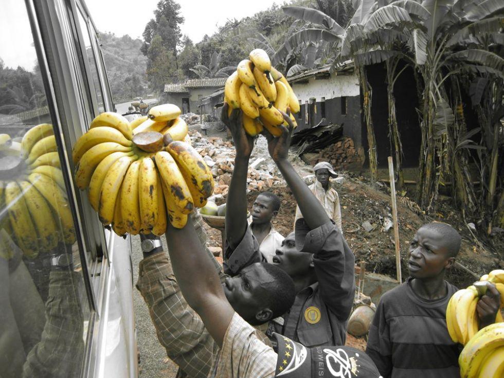 banany prosto z ugandy