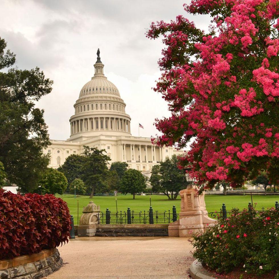 bialy-dom-siedziba-prezydentow-usa-w-waszyngtonie
