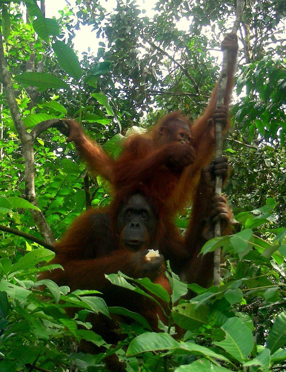 ogladanie naturalnie wystepujacych dzikich zwierzat w semengoh wildlife centre
