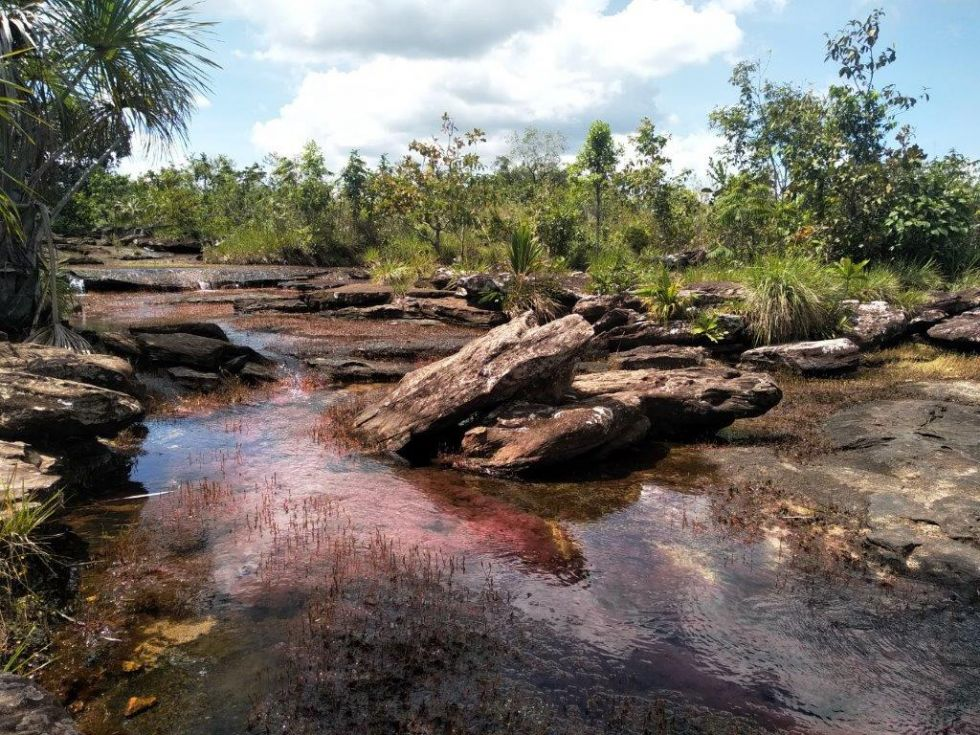 Wyprawa do Kolumbii. Kolorowa rzeka. Serrania de la Macarena.