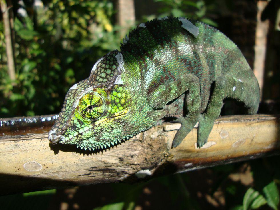 Fauna i flora Madagaskaru