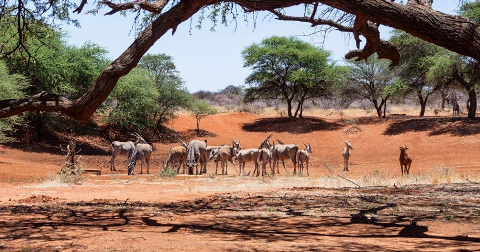 Namibia. Osobliwości fauny w Parku Narodowym Etosha.
