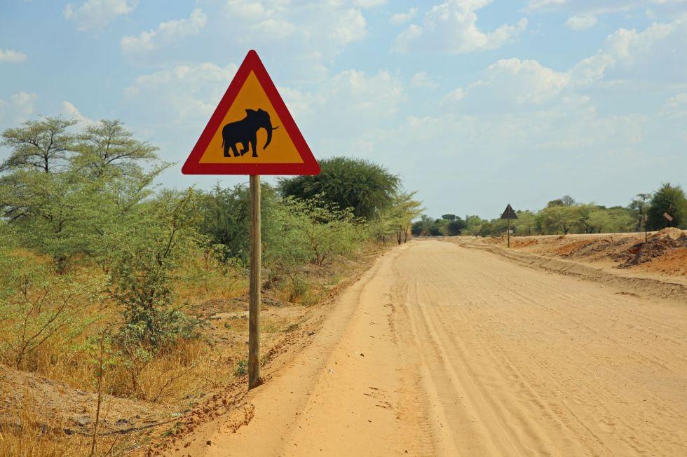 znak uwaga slonie