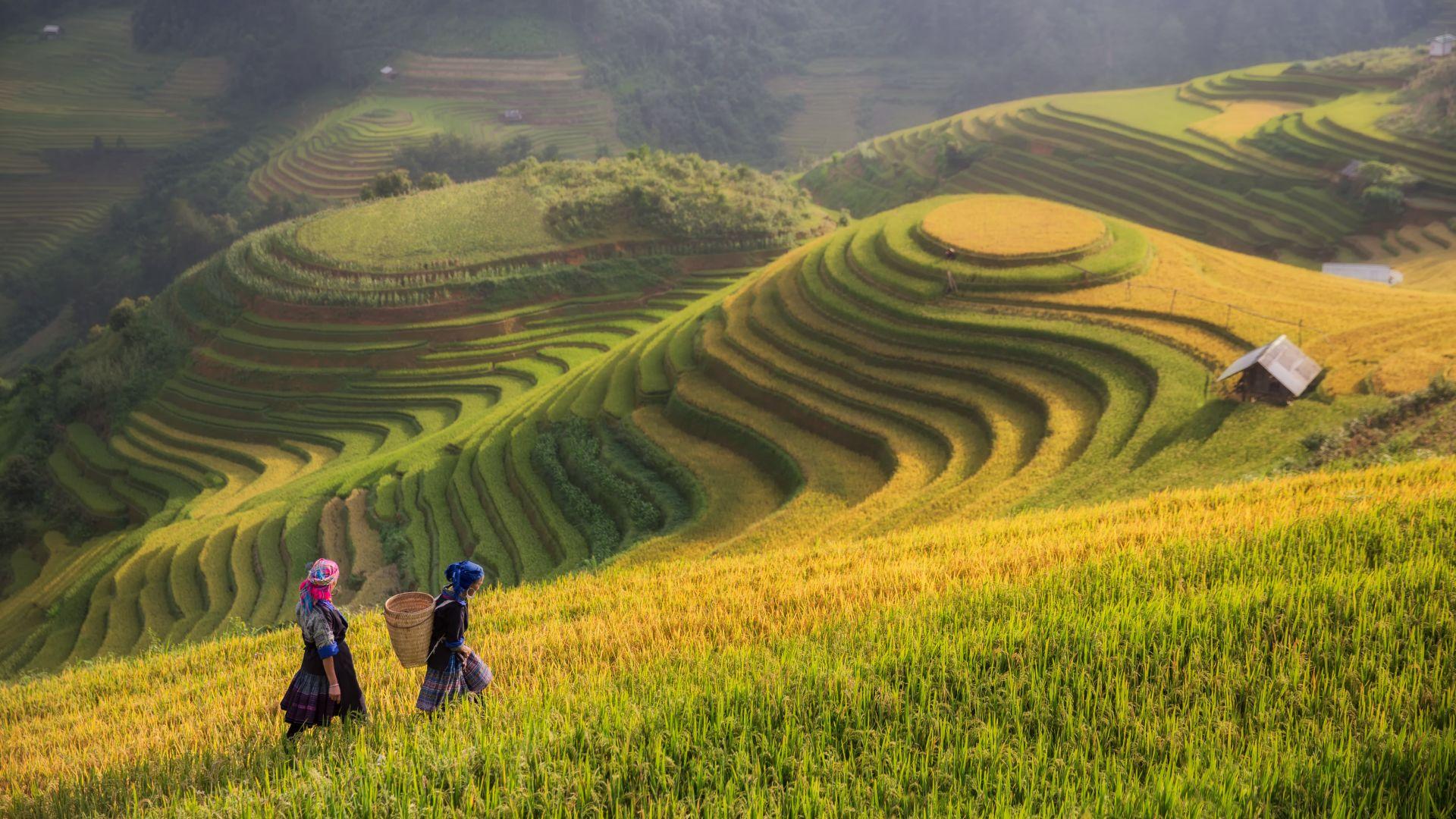 wietnam, sapa, pola ryzowe