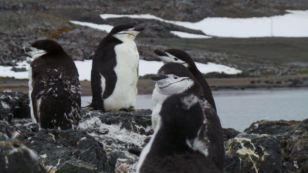 Antarktyda - wyprawa zycia
