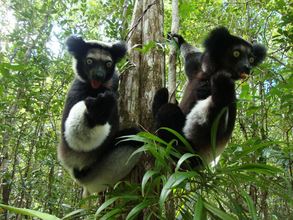 Lemury Madagaskar