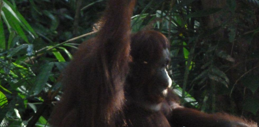 zwierzęta amazonskiej dżungli