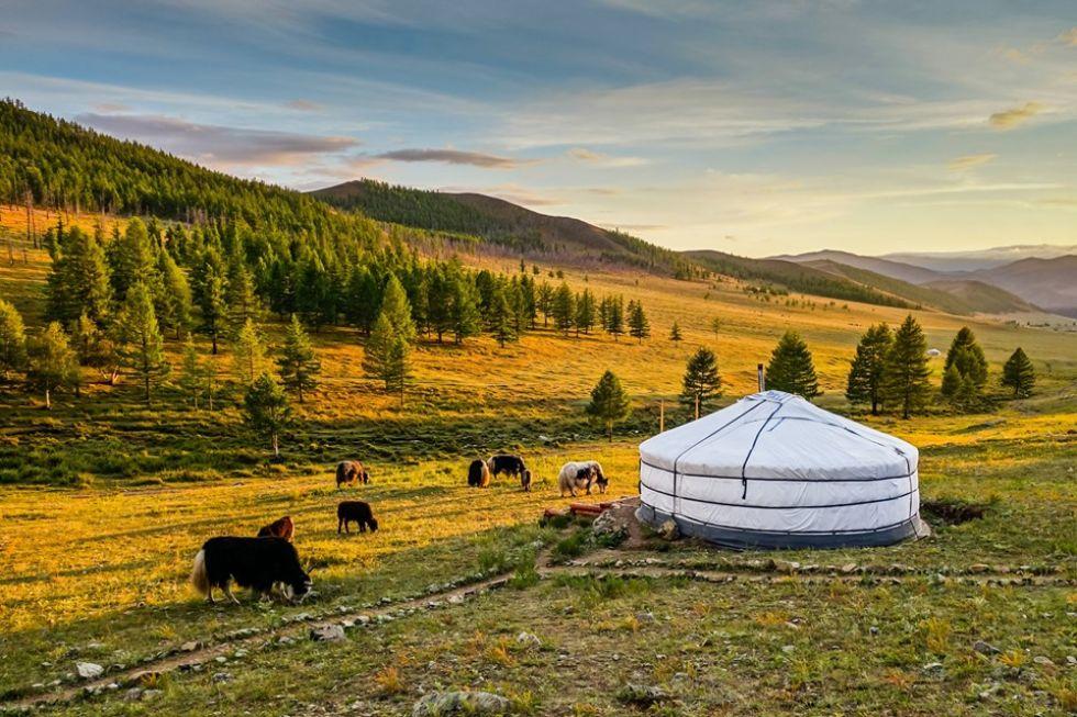 nocleg w jurtach w otoczeniu mongolskich widokow