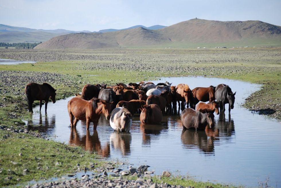 zwierzeta na mongolskim stepie