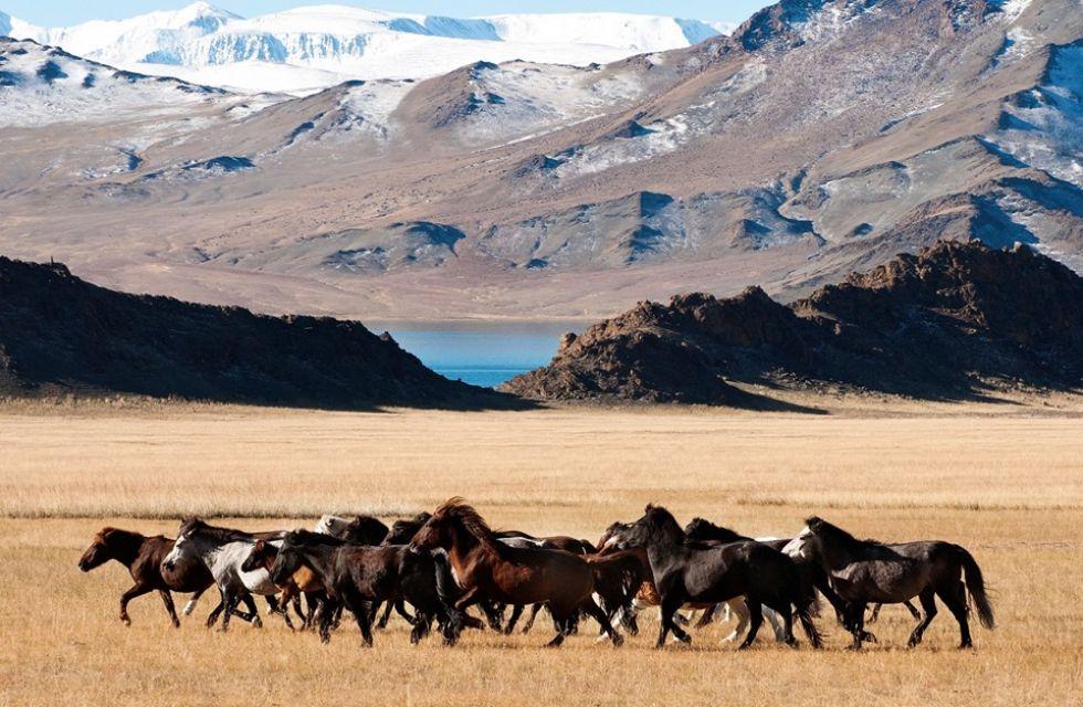 stado koni w otoczeniu mongolskich gor