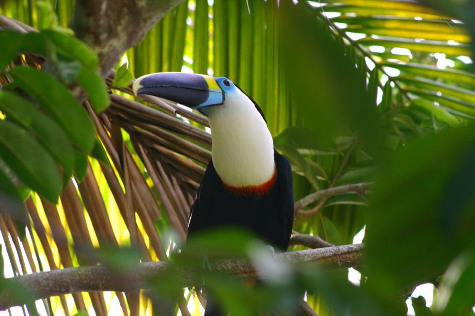 Amazonia - dżungla