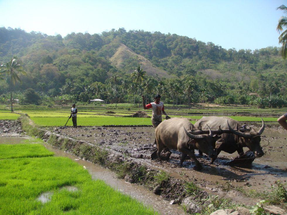 Indonezja wycieczka biuro podróży