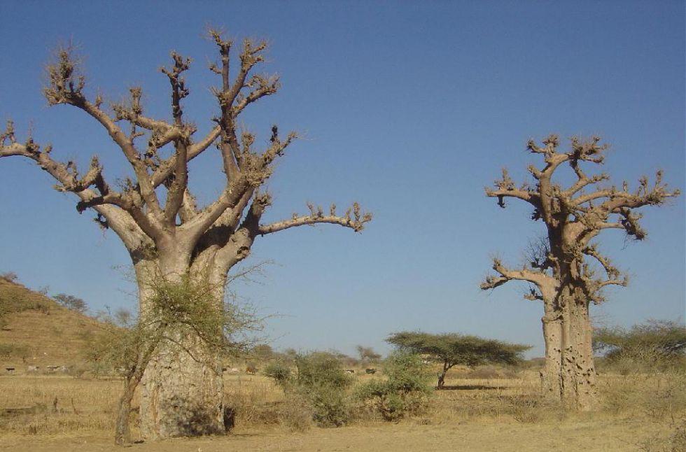 sudan wycieczka