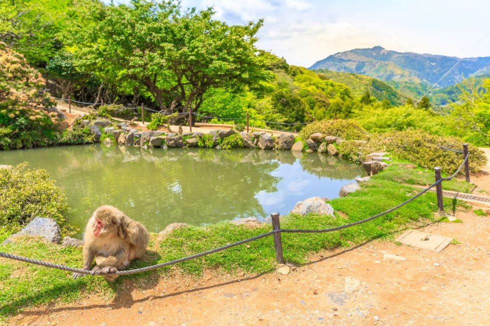 malpi park iwatayama