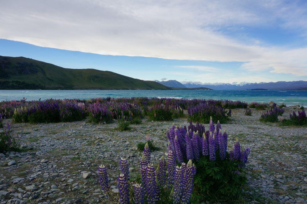 Podróż do Nowej Zelandii, krajobrazy Nowej Zelandii