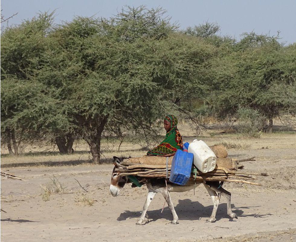Wyprawa do Czadu, eksploracja wyżyny Ennedi.