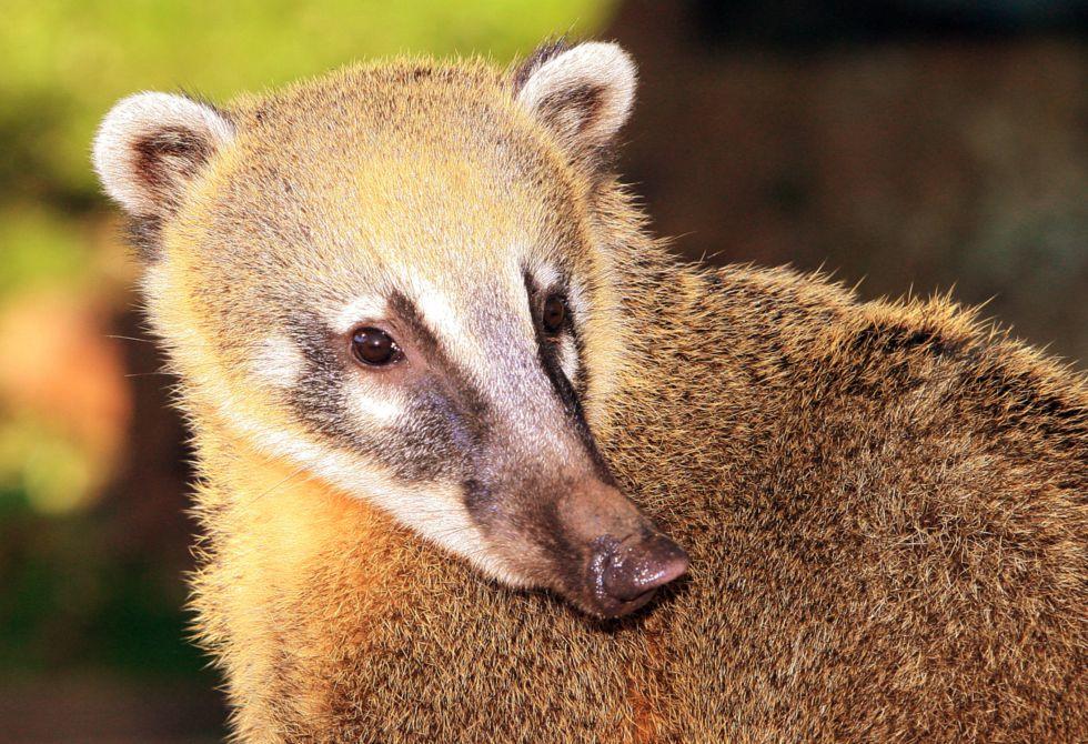 Fauna i flora Brazylia
