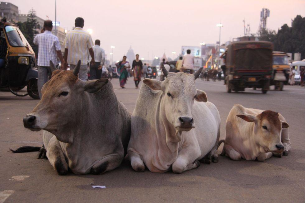 Podglądanie życia codziennego podczas wyprawy do Indii.
