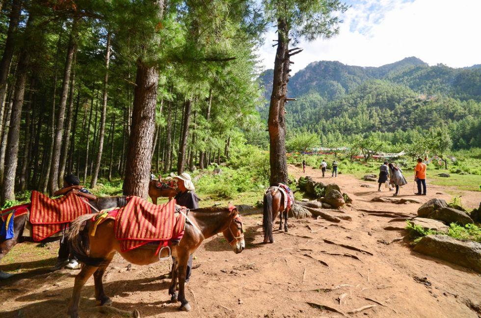 paro w bhutanie