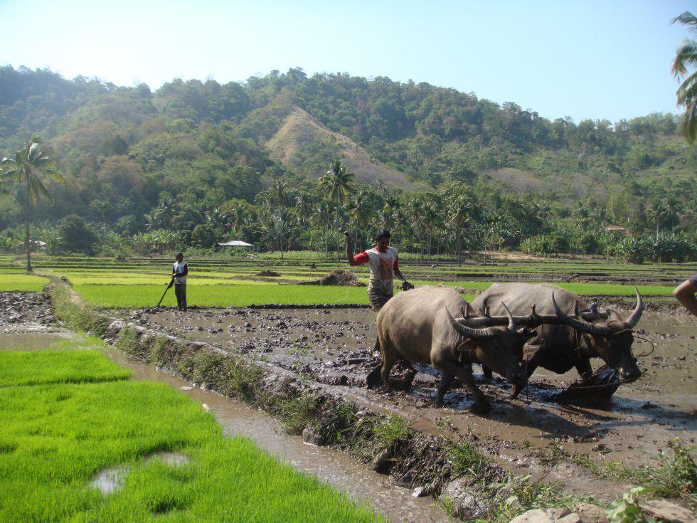 codzienne życie w Indonezji
