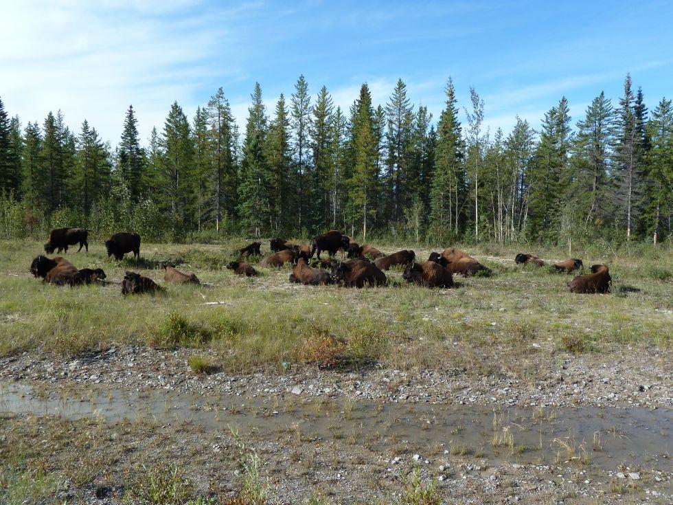 Kanada - cuda dzikiej przyrody Terytoriów Pólnocno - Zachodnich oraz Gór Skalistych
