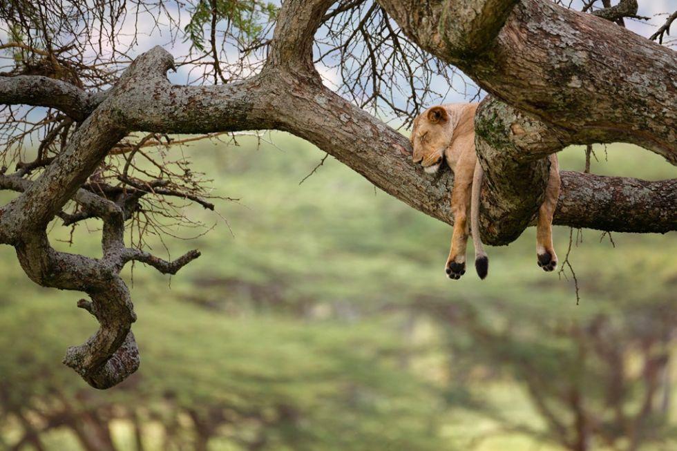 Kenia fotograficzne safari - Masai Mara.