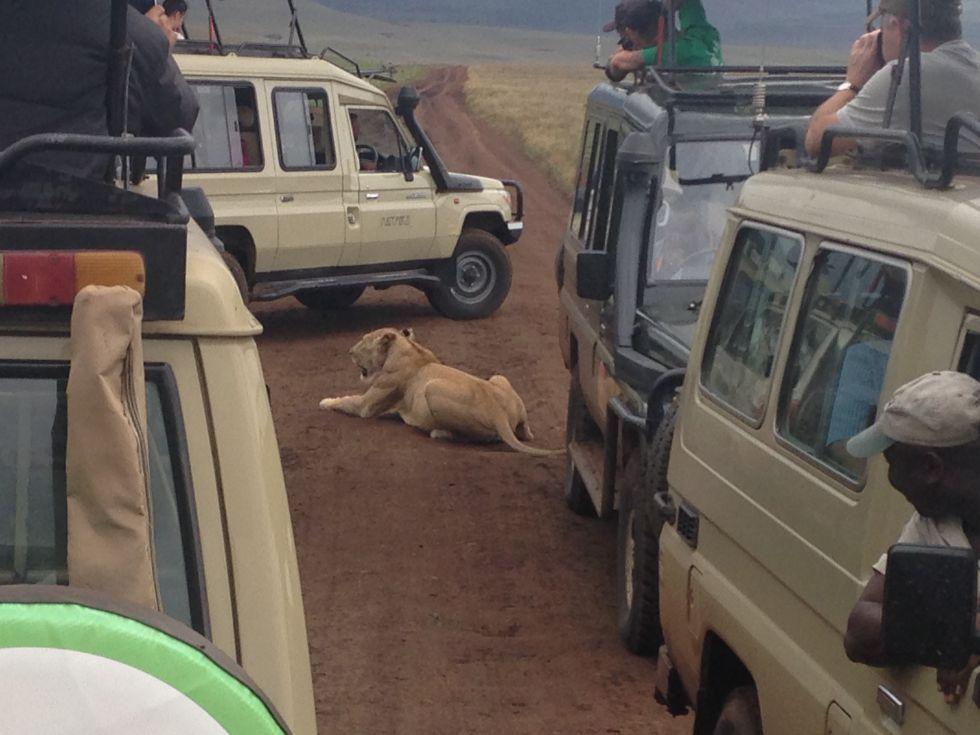 Safari w Parku Jeziora Nakuru