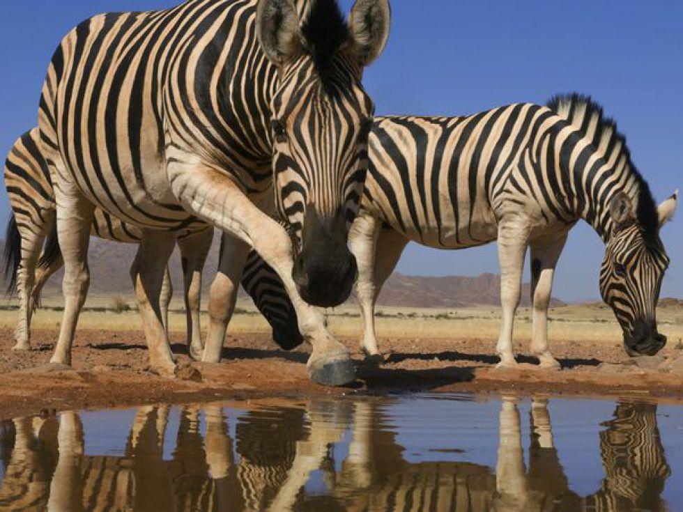 Namib jezioro. Wycieczka do Namibii