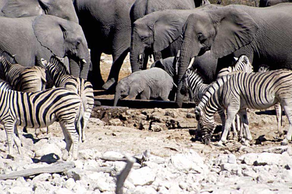 rezerwat Etosha. Wycieczka do Afryki