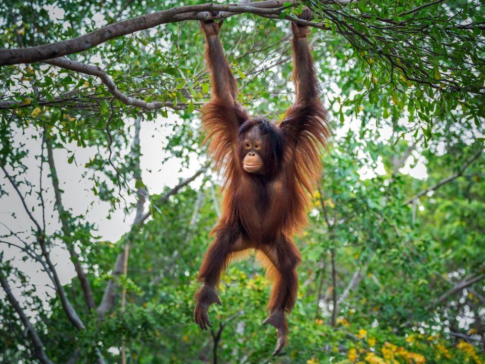 dżungla Parku Narodowego Leuser - możliwość spotkania małp
