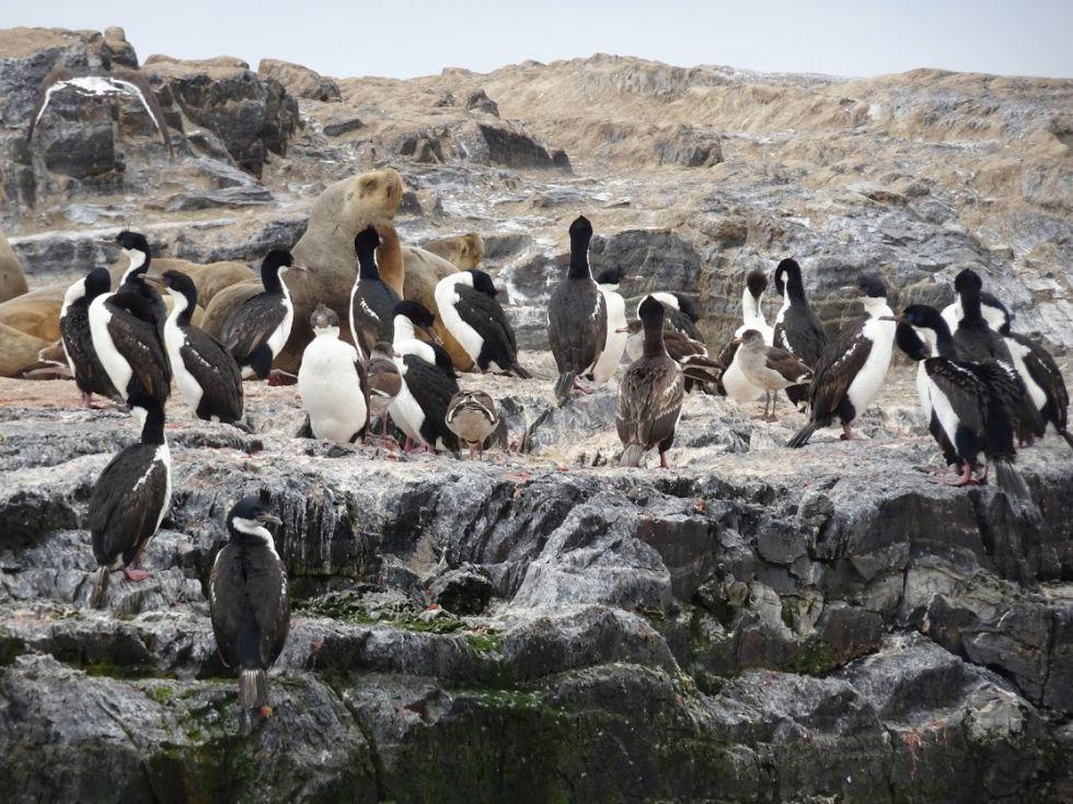 Puerto Natales - koonia pingwinów Magellana. Maraton na Antartydę i zwiedzanie
