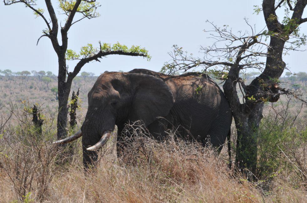 rezerwaty Poludniowej Afryki - safari w Parku Krugera