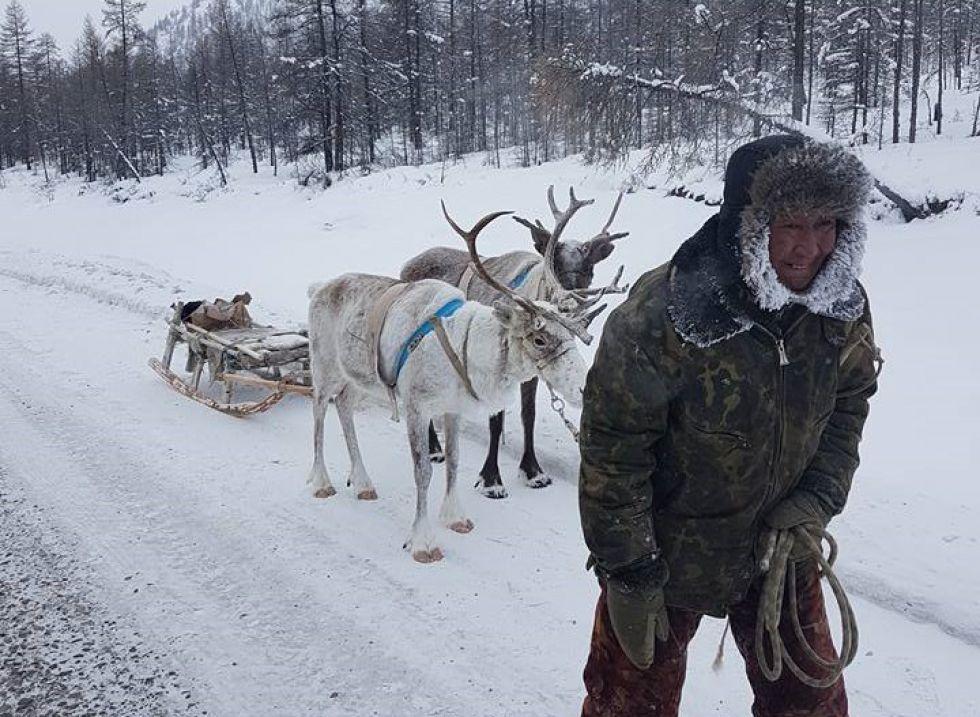 Wyprawa na Syberię, Ewenkowie i reniferu w okolicach Oimjakon