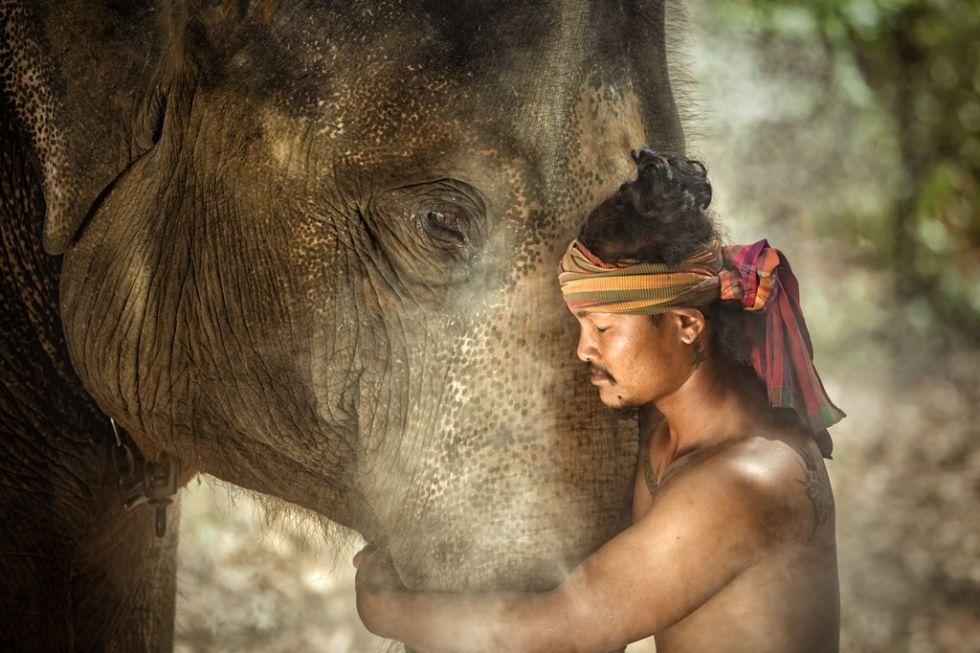 Słoń i mieszkaniec Cejlonu. Wycieczka Sri Lanka - Malediwy.