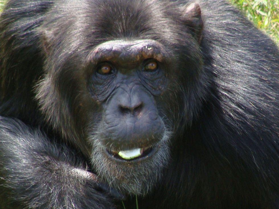 szympansy Uganda Rwanda Burundi