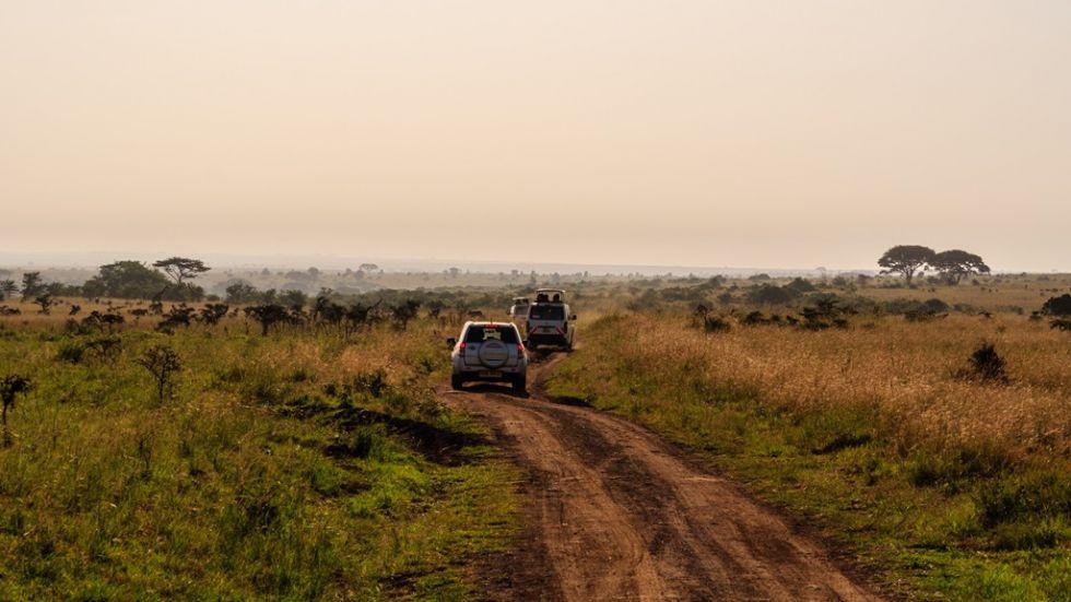 safari w ugandzie