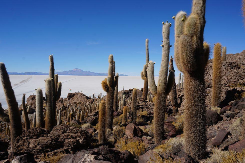 inkahuas island i sejsa z kaktusami